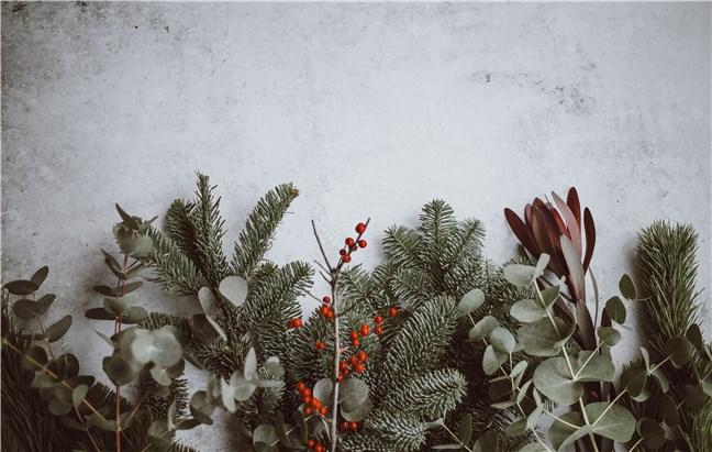 Pine, Eucalyptus, Berries by Annie Spratt